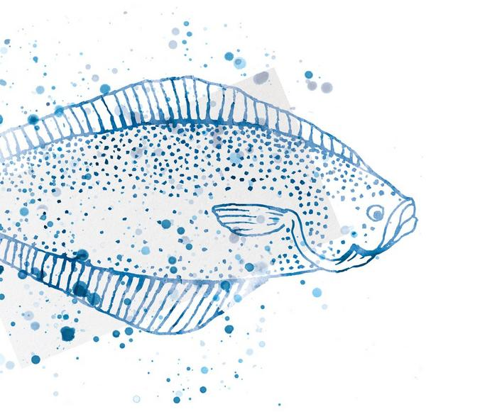 A watercolour illustration of a fish.
