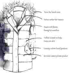 image of FatFace women's cumbria longline puffer jacket