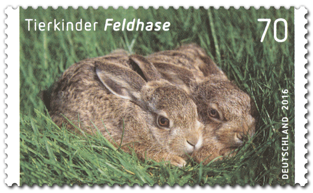 Briefmarke Feldhase