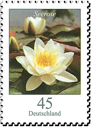 """Dauerserie """"Blumen"""" Seerose"""