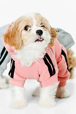 Novelty Hooded Sports Dog Outfit