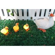 Solar Duck And Ducklings