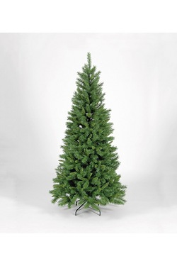 Green Duchess Spruce Tree