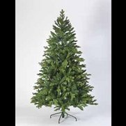 Coniferous Spruce Christmas Tree