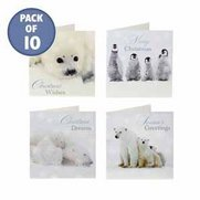 Pack Of 10 Polar Animals Cards