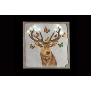 LED Butterfly Stag Canvas