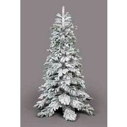 Nordmann Fir Frosted Christmas Tree