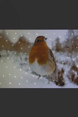 Robin On Snowy Ground Canvas