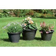 Pack Of Three Wicker Planters