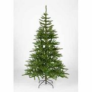Green Pinna Pine Tree