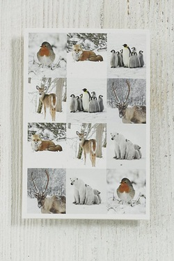 10 Polar Animals Tags