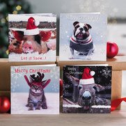 Pack Of 10 Photographic Animals Cards