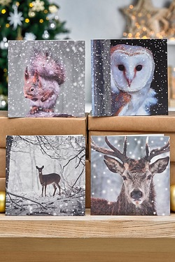 Pack Of 10 Photographic Woodland Cards