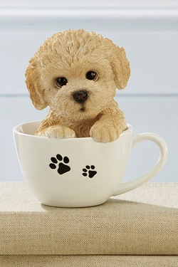 Teacup Pet Pals - Labradoodle