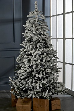 Nordmann Frosted Fir Tree