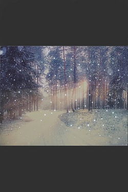 LED Fibre Optic Snowy Forest Canvas