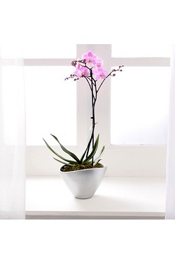 Personalised Single Spike Orchid