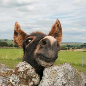 Sir John Donkey