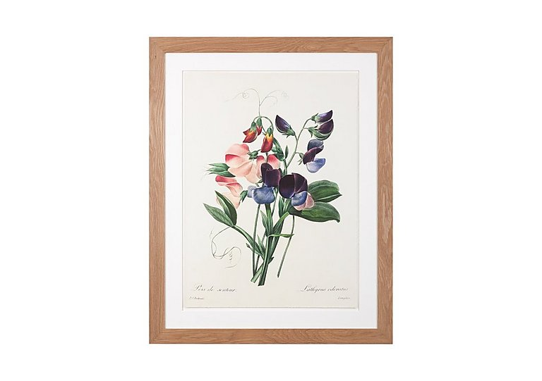Sweet Peas Framed Picture in  on FV