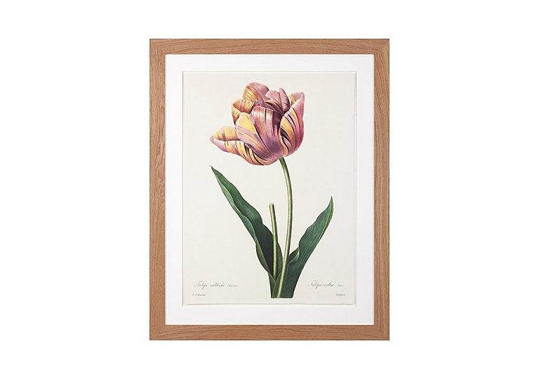 Blooming Tulip Framed Picture in  on FV