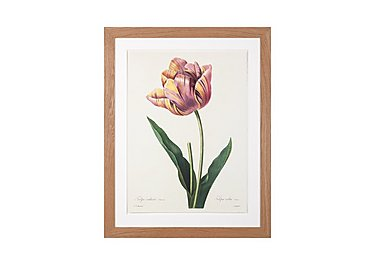 Blooming Tulip Framed Picture in  on Furniture Village