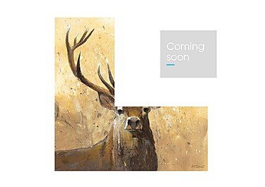 The Stag  Picture in  on FV