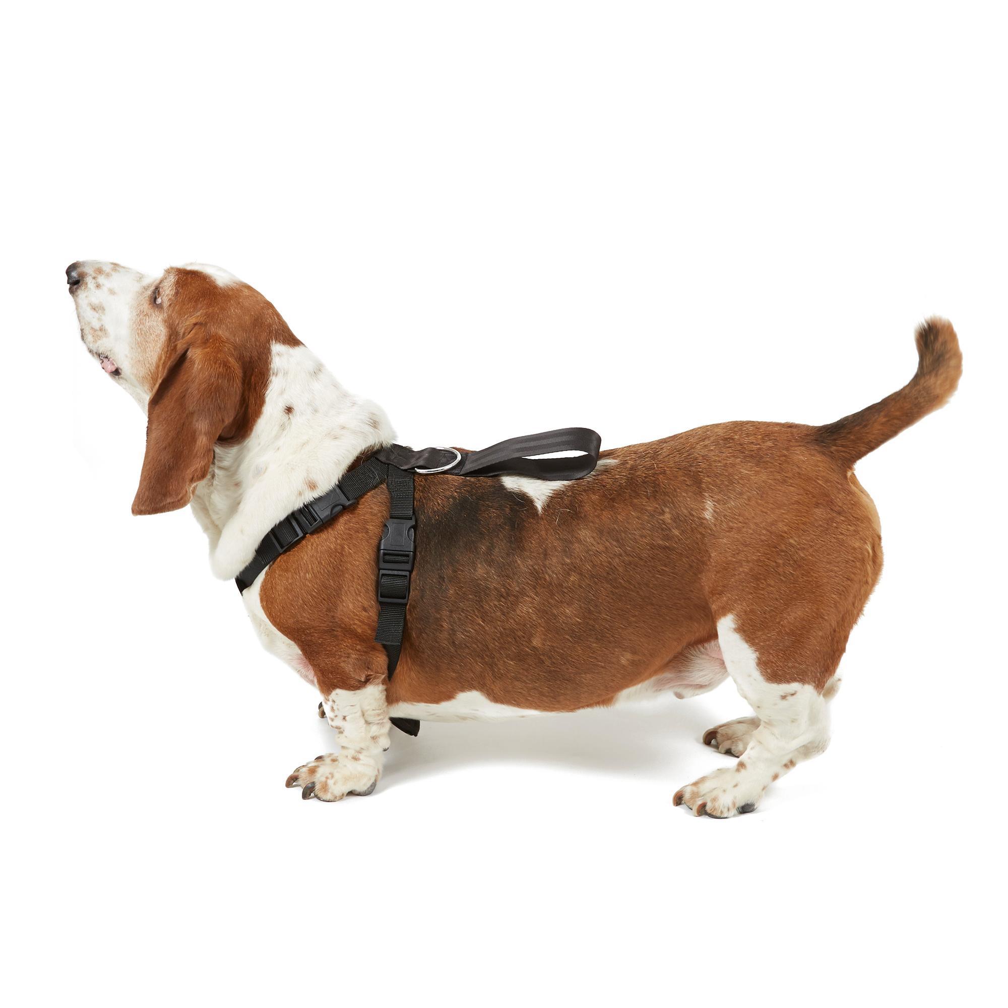 Image of Boyz Toys Dog Harness - Large, Black