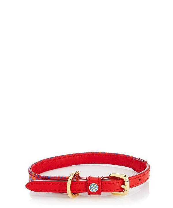 Extra Small Iphis Dog Collar