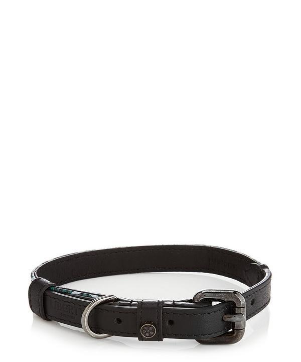 Small Iphis Dog Collar
