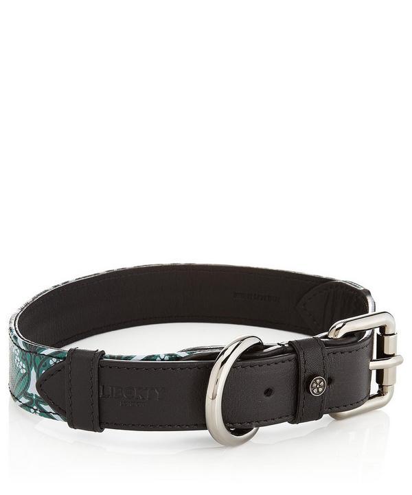 Medium Iphis Dog Collar