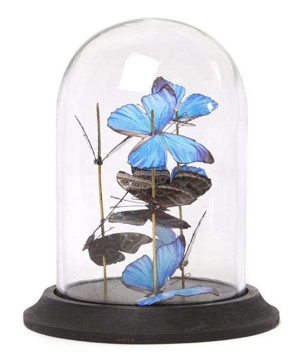 Mini Butterfly Bell Jar