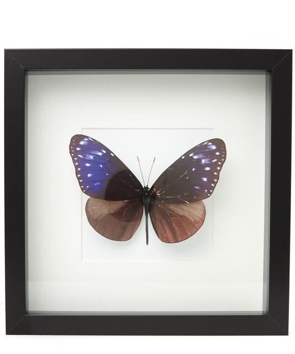 Butterfly IIV Frame