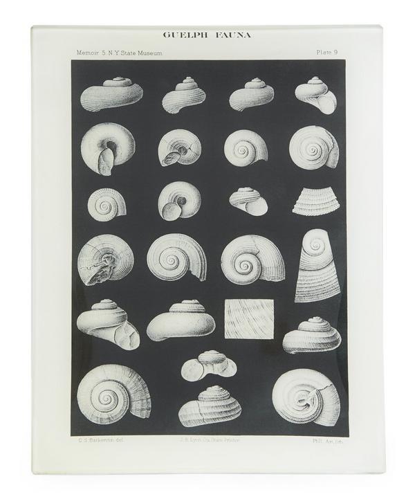 Shell Fossils #9 Rectangular Tray