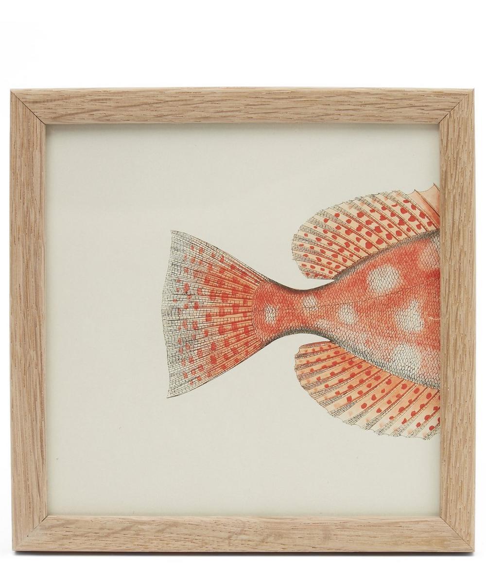 Orange Fish Rear Half Framed Print