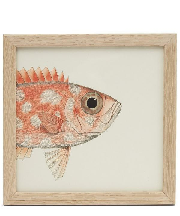 Orange Fish Front Half Framed Print
