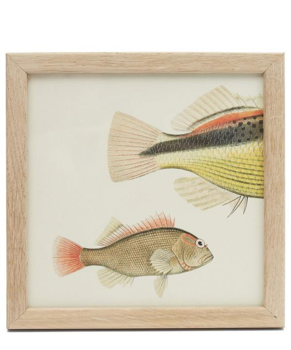 Fish Trio Rear Half Framed Print