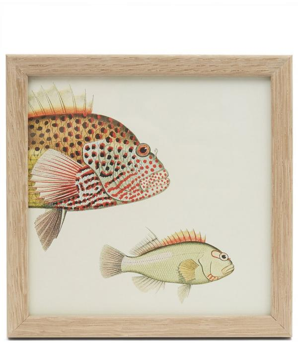Fish Trio Front Half Framed Print