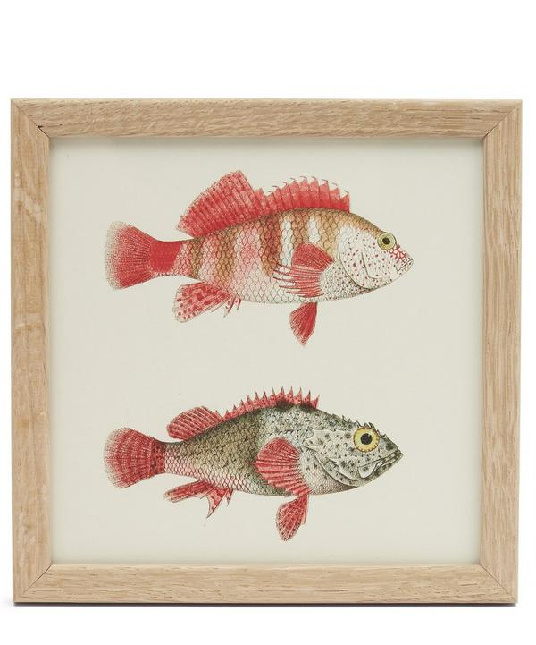 Fish Duo Framed Print