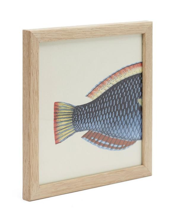 Blue Fish Rear Half Framed Print
