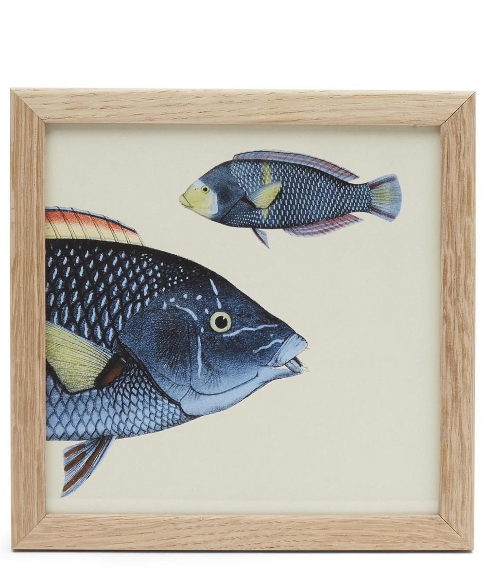 Blue Fish Front Half Framed Print