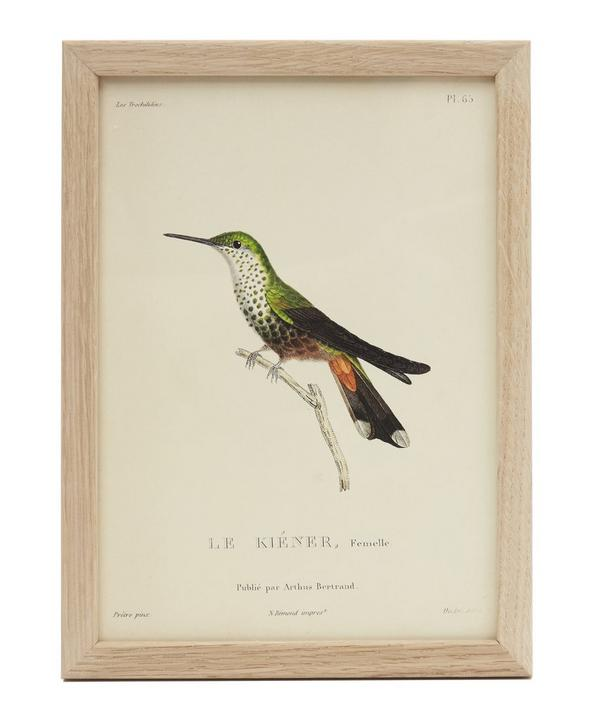 Green Hummingbird Framed Prin