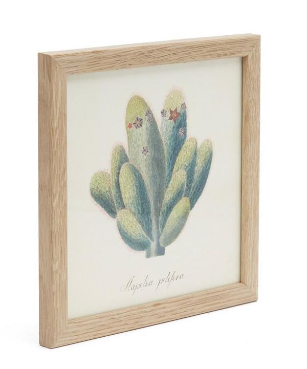 Cacti I Framed Print