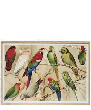 Parrots Framed Print