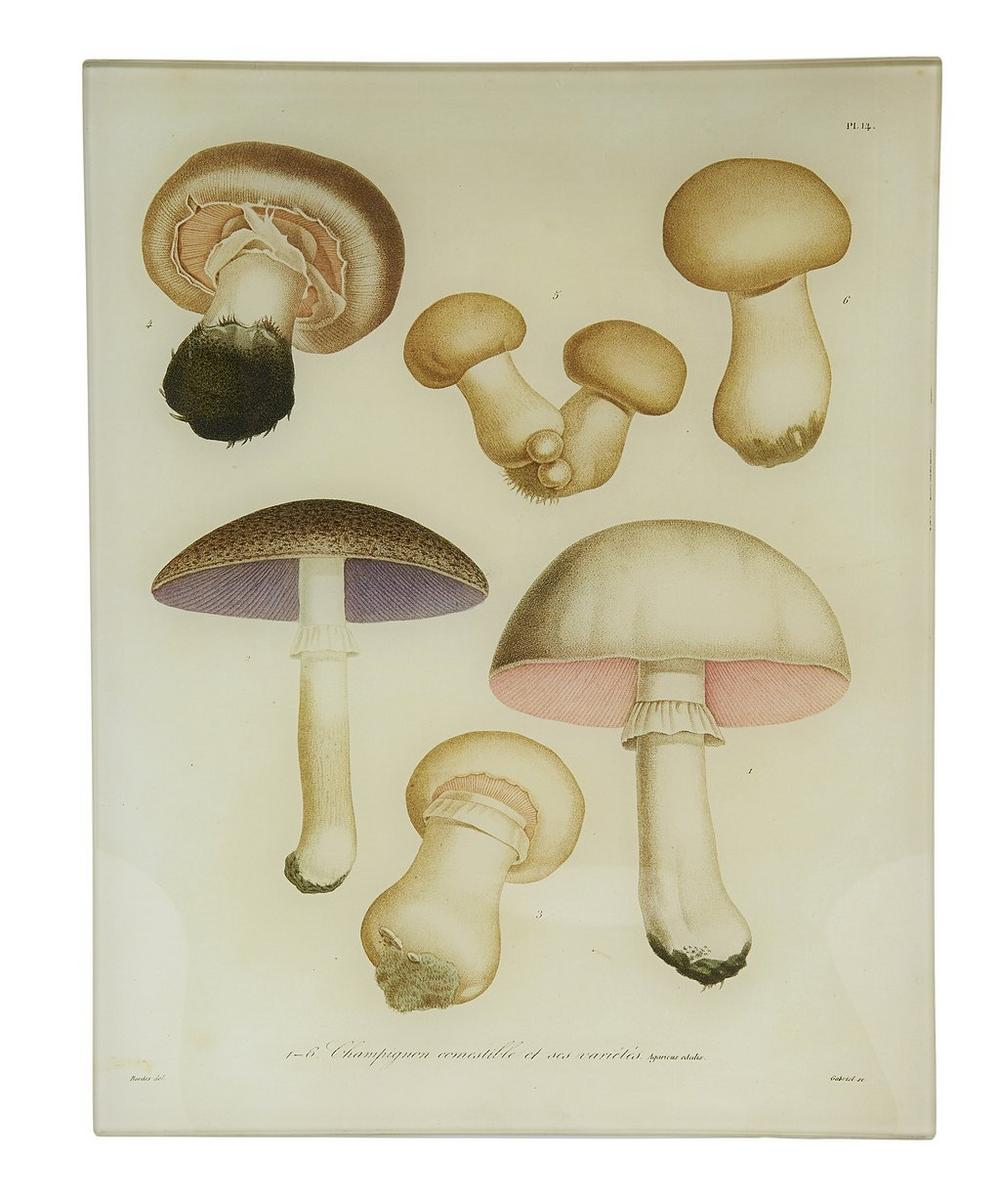 Mushroom No. 14 Rectangular Tray