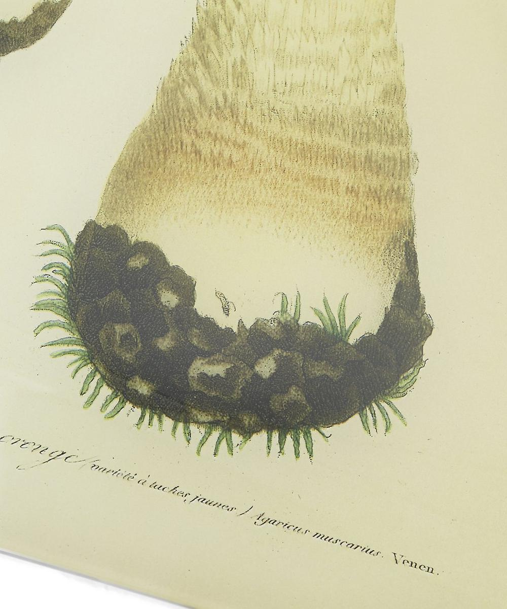 Mushroom No. 19 Rectangular Tray
