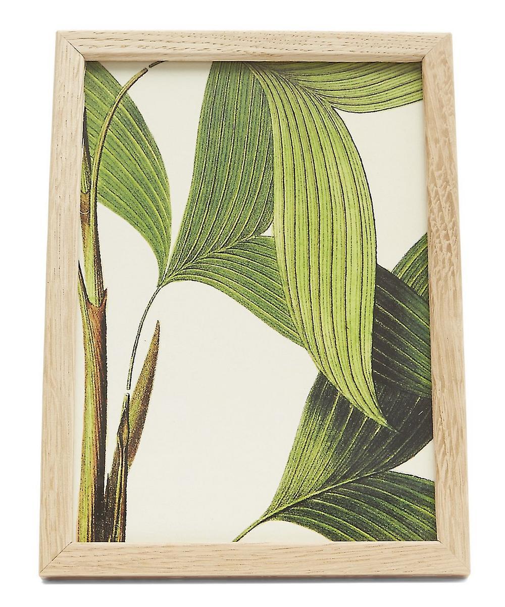 Plant No. 19 Framed Print