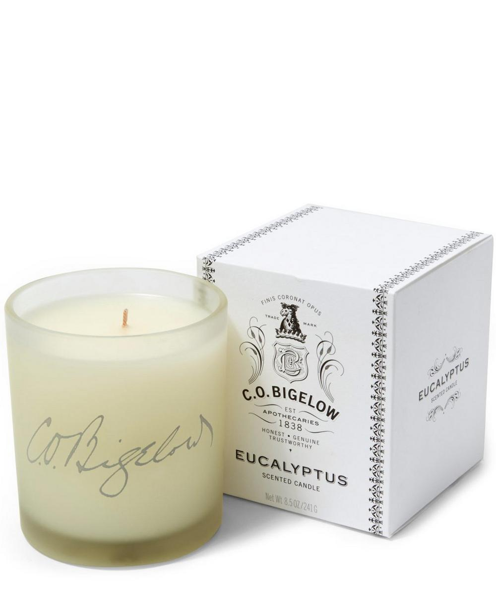 Eucalyptus Candle 241ml
