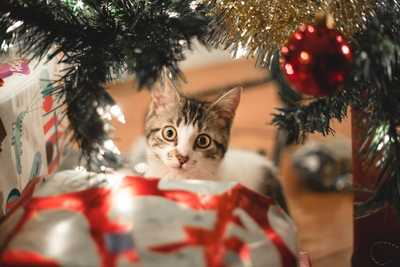 cat proofing your christmas tree