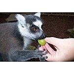 image of Feed The Lemurs At Paradise Wildlife Park
