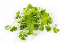 Celery Micro-Greens